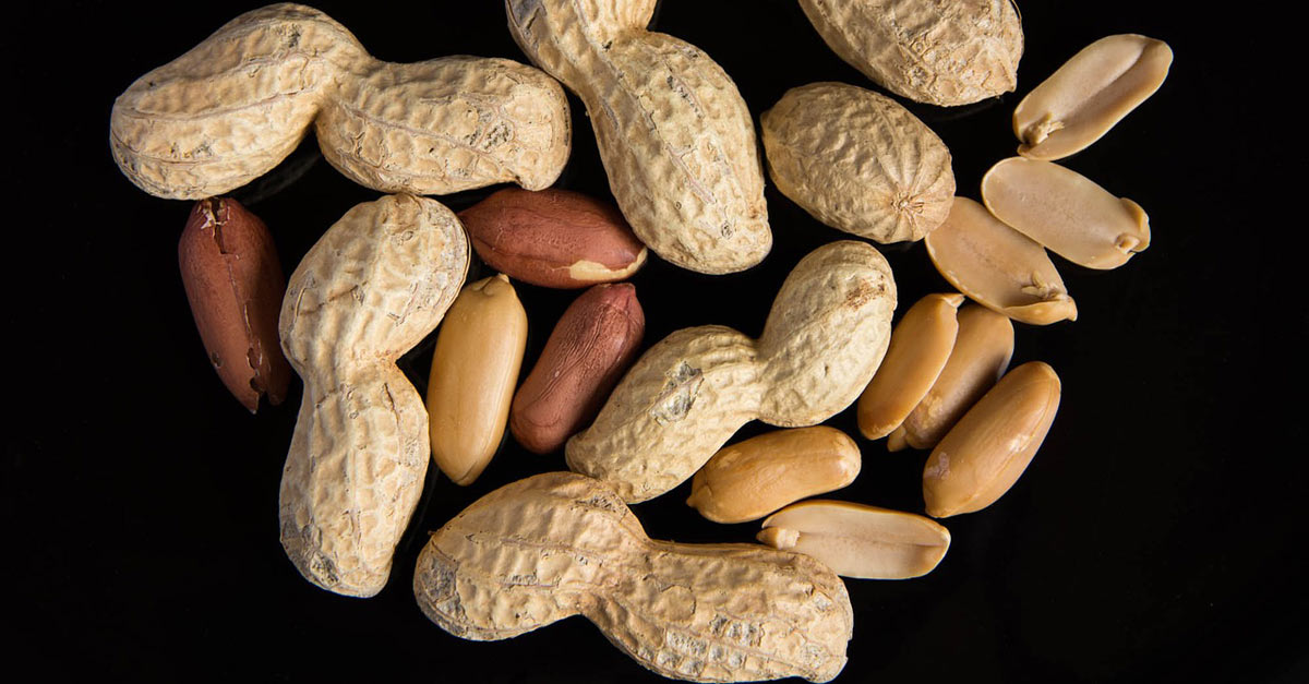 Breakthrough Treatment Provides Long-term Cure for Peanut Allergies