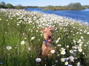 Hypoallergenic Dogs – Hypoallergenic List