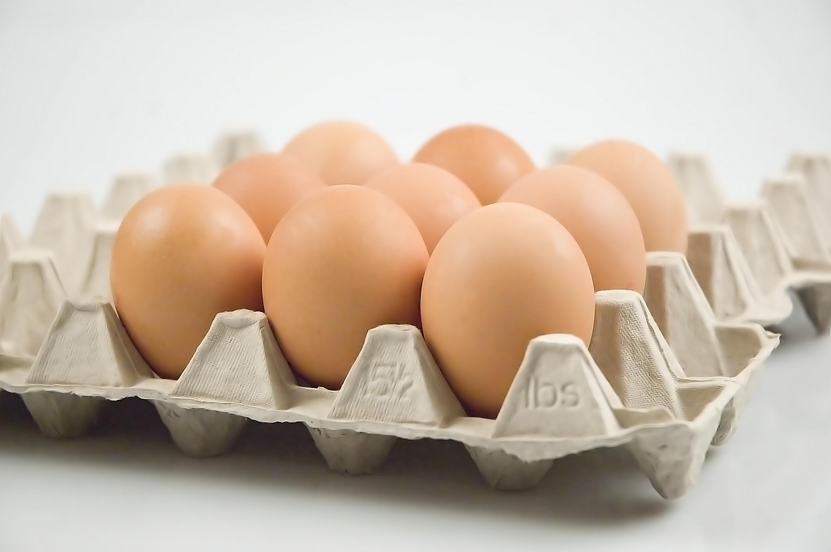 Egg Allergy Information