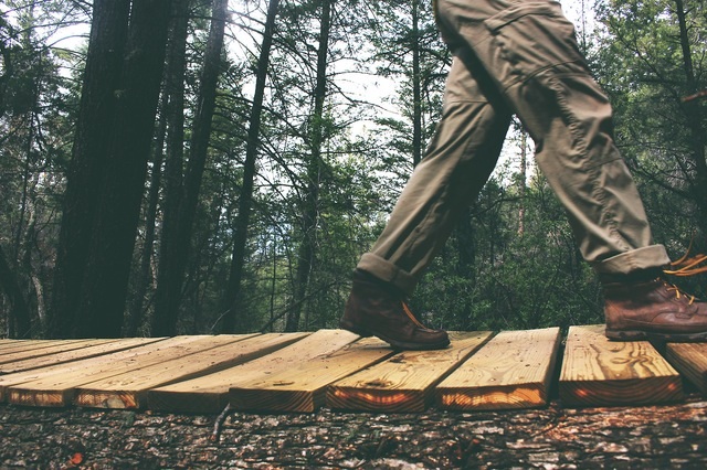 wood-nature-person-walking